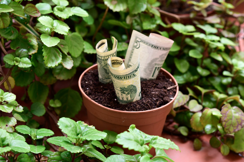 Currency in a flower pot